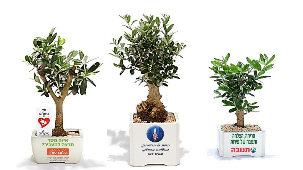 טיפול בעץ הזית, עציץ ממותג, מתנות לעובדים,