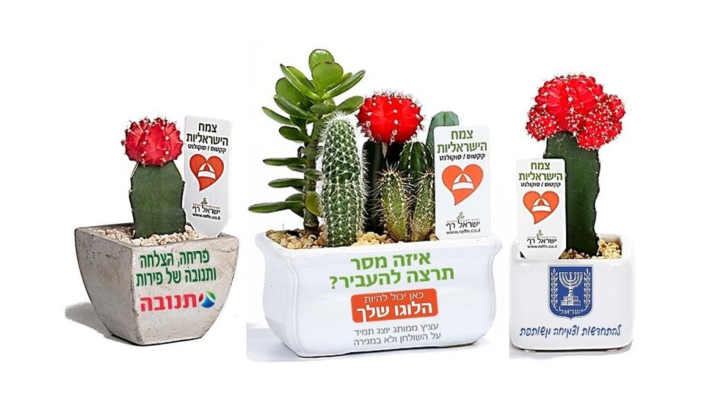 טיפול בקקטוסים וסוקולנטים, מסר של ישראליות, קקטוס צבעוני