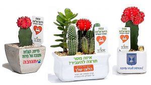 עציצים ממותגים, מסר של ישראליות, קקטוס צבעוני