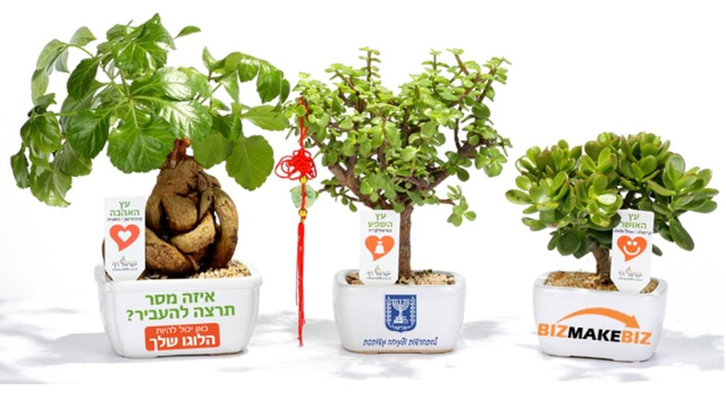 מתנות לחג הפסח, עציצים ממותגים מתנות לעובדים, שי ללקוחות