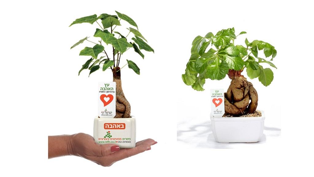 עץ אהבה ממותג, מסר של אהבה, מתנות לחגים, שי בכנסים ואירועים