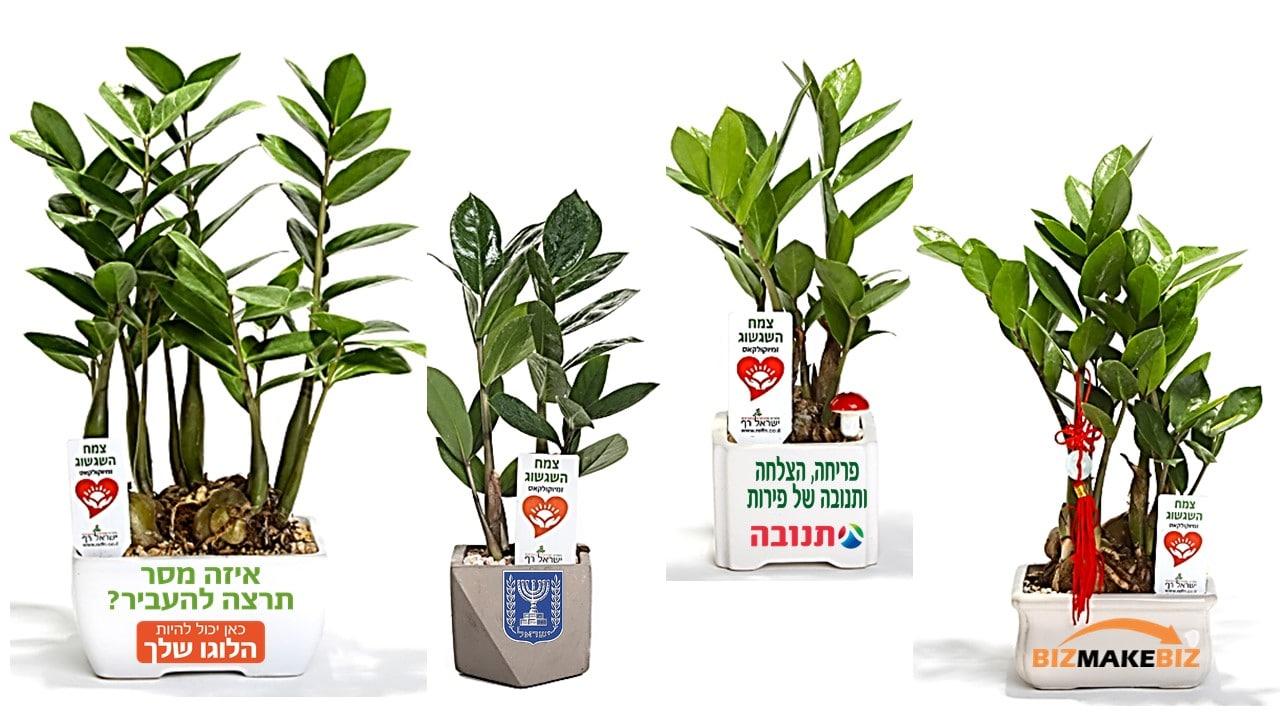 עציצים ממותגים, מסר של שגשוג, למתנות כנסים ואירועים