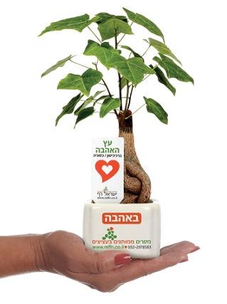 מתנות לחג האהבה, עץ אהבה ממותג