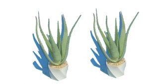 טיפול בעציץ אלוורה, צמח מרפא
