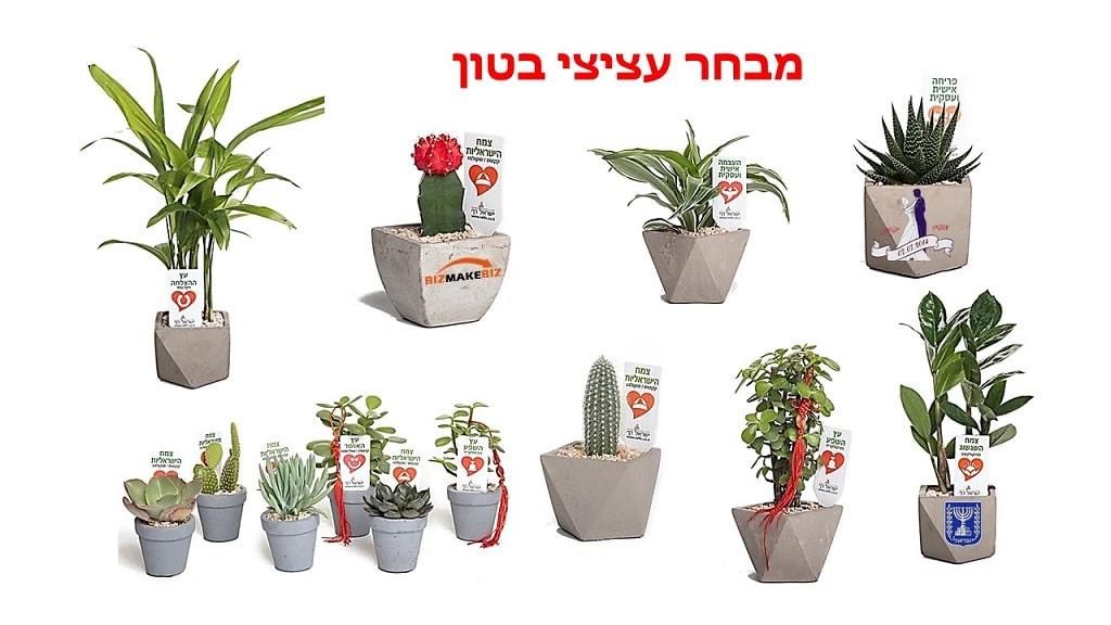 עציצי בטון ממותגים, מתנות לראש השנה, מתנות לעובדים, שי ללקוחות