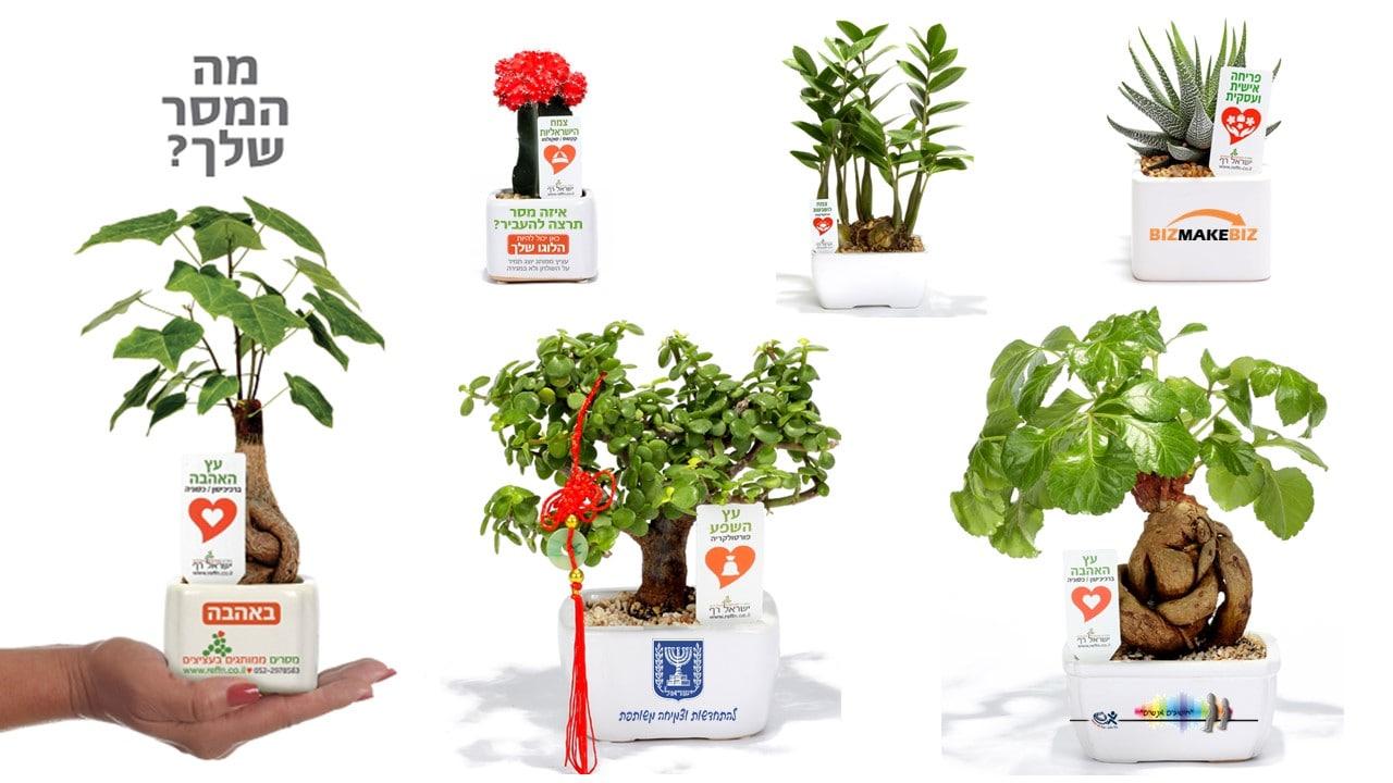 מתנות לאירועים, עציצים ממותגים, מתנות לעובדים והלקוחות