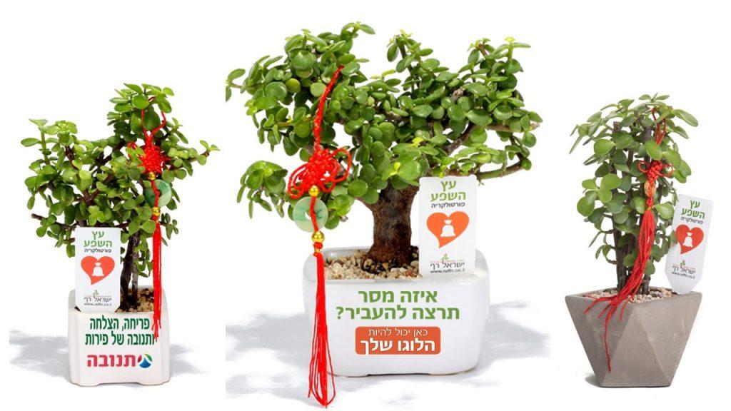 בונסאי עץ השפע, מתנות לראש השנה