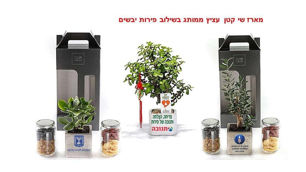 מתנות לטו בשבט, עציצים ממותגים, מארזי שי לטו בשבט, עציצים לטו בשבט
