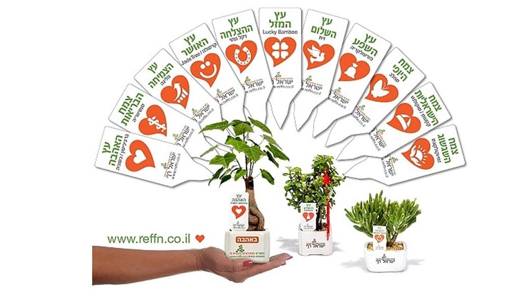 מבחר עציצים ממותגים, מבחר מסרים ממותגים בעציצים
