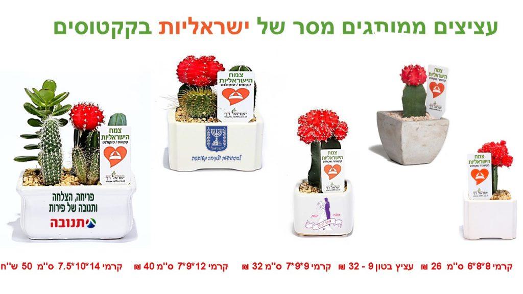 עציצים ממותגים מסר של ישראליות קקטוסים וסוקולנטים