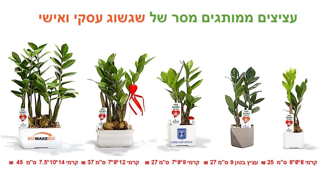 עציצים ממותגים מסר של שגשוג עסקי ואישי