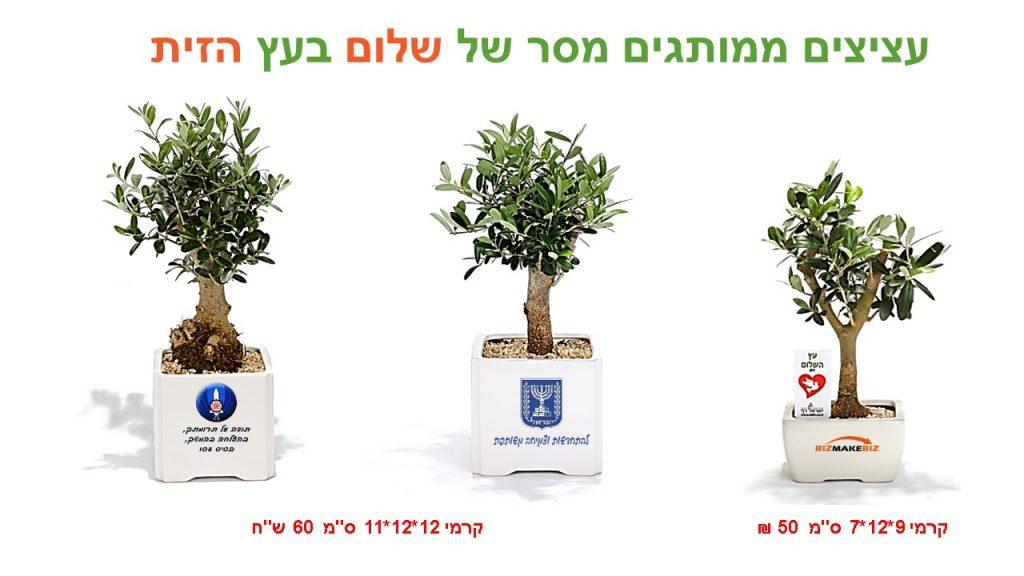עציצים ממותגים מסר של שלום בעץ הזית