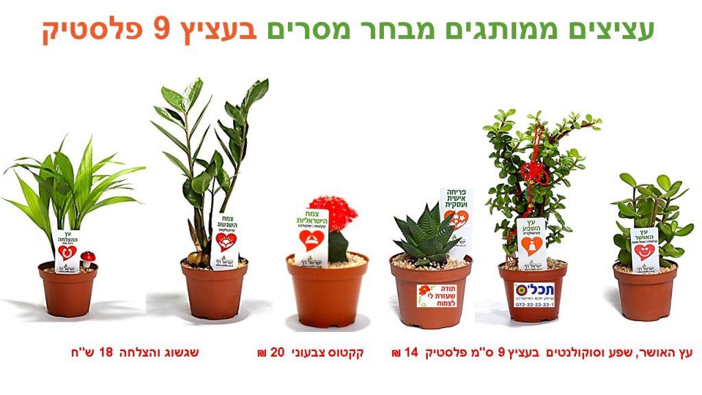 עציצים ממותגים עציץ 9 פלסטיק