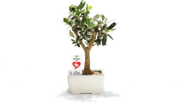 עציץ ממותג, עץ הזית ממותג, מתנות לטו בשבט, מתנות לעובדים