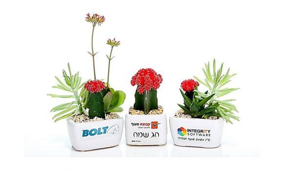 עציצים ממותגים, מסר של ישראליות, קקטוס צבעוני, למתנות כנסים ואירועים