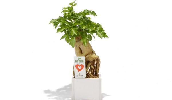 עציץ ממותג, מסר של אהבה, קרמי 9*9, מתנות לטו בשבט, שי בכנסים ואירועים