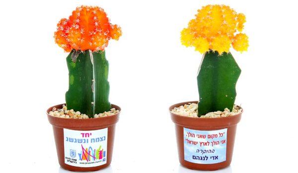 עציץ ממותג, מסר של ישראליות, קקטוס צבעוני, מתנות בכנסים ואירועי