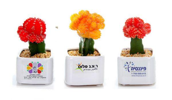 עציץ ממותג, מסר של ישראליות, קקטוס צבעוני, קרמי 9*9, למתנות, כנסים ואירועים
