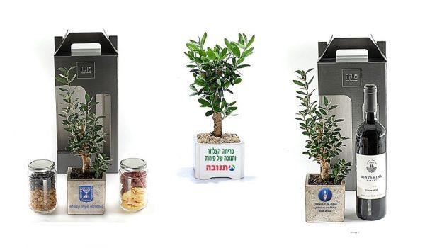 מארזי שי, עץ זית ממותג, מארזי שי לראש השנה, מארזי שי לעובדים