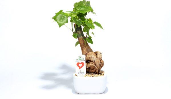 עץ האהבה ממותג, קרמי 10*14, מתנות לחגים, מתנות לעובדים והלקוחות