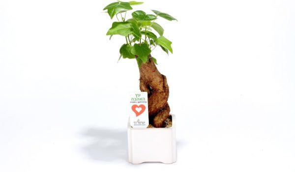 עציץ ממותג, עץ האהבה ממותג, מתנות לראש השנה, מתנות לעובדים והלקוחות