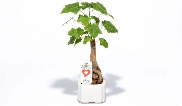 עץ האהבה ממותג, מתנות לחגים, מתנות לעובדים והלקוחות, שי בכנסים