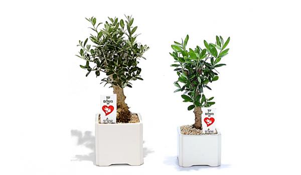 עץ הזית, עציץ ממותג, מתנות לעובדים, מתנות לחגים, שי ללקוחות