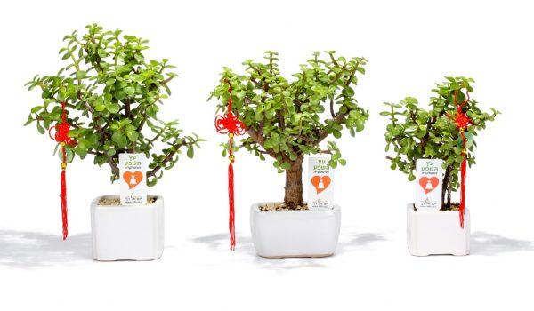 עציצים ממותגים, מסר של שפע, מתנות לעובדים, שי ללקוחות