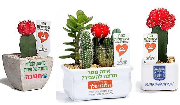 עציצים ממותגים, מסר של ישראליות , קקטוס צבעוני, למתנות כנסים ואירועים