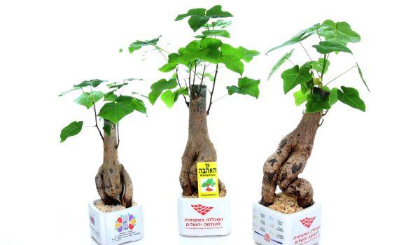 מתנות לראש השנה, עציצים ממותגים, שי באירוע